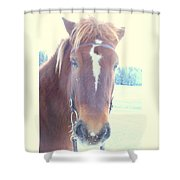 Horses Use Complex Facial Expressions Nearly Identical To Humans  Shower Curtain by Hilde Widerberg
