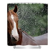 Horse Bath I Shower Curtain