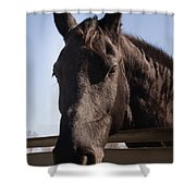 Horse By A Fence. Shower Curtain