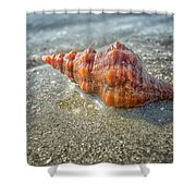 Horse Conch Shower Curtain