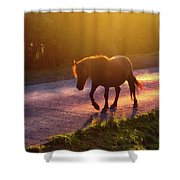 Horse Crossing The Road At Sunset Shower Curtain