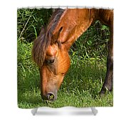 Horse Cuisine  Shower Curtain