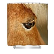 Horse Eye Shower Curtain