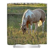 Horse Feeding In Grass Farm With Sunset Light From The Left Shower Curtain