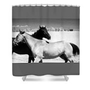 Horse Friends Two  Shower Curtain