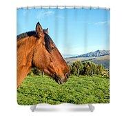 Horse Head Closeup Shower Curtain