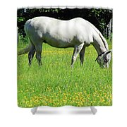 Horse In A Field Of Flowers Shower Curtain