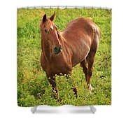 Horse In A Field With Flowers Shower Curtain