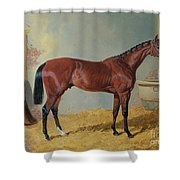 Horse In A Stable Shower Curtain by John Frederick Herring Snr