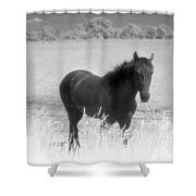 Horse In A Summer Dreamfield  Shower Curtain