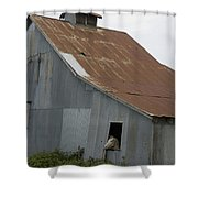 Horse In Barn Shower Curtain