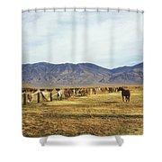 Horse In Eastern Sierras Shower Curtain