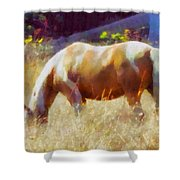 Horse In Field Shower Curtain