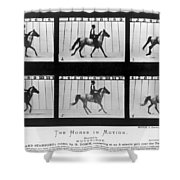 Horse In Motion, 1878 Shower Curtain