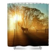 Horse In The Fog At Dawn Shower Curtain