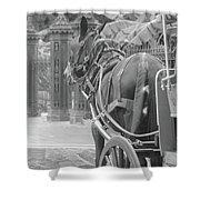 Horse In The Quarter Shower Curtain