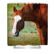 Horse Look Shower Curtain