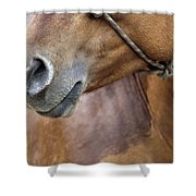 Horse Of Course Shower Curtain