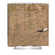Horse On Canyon Floor Shower Curtain