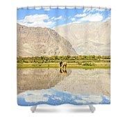 Horse On Lake Shower Curtain