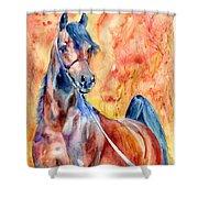Horse On The Orange Background Shower Curtain