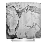 Horse Pair Shower Curtain