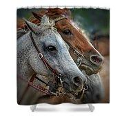 Horse Pair Shower Curtain