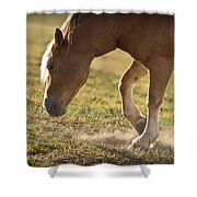 Horse Pawing In Pasture Shower Curtain