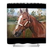 Red Dun Horse - Reds Done Dancin By Marilyn Nolan-johnson Shower Curtain