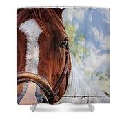 Horse Portrait Closeup Shower Curtain