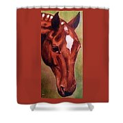 Horse Portrait Horse Head Red Close Up Shower Curtain
