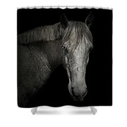 Horse Portrait I Shower Curtain