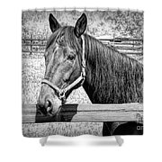 Horse Portrait In Black And White Shower Curtain
