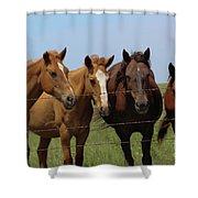 Horse Quartet Shower Curtain