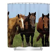 Horse Quintet Shower Curtain