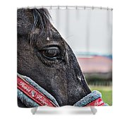 Horse Riding Horse Shower Curtain