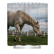 Horses #1 Shower Curtain