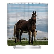Horses #3 Shower Curtain