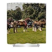 Horse Show Shower Curtain