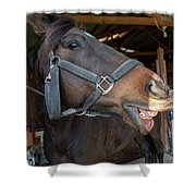 Horse Snack  Shower Curtain