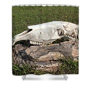 Horse Spirit 1 Shower Curtain