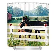 Horse Stable Shower Curtain