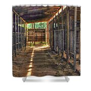 Horse Steabels  Shower Curtain