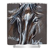 Horse Study Shower Curtain