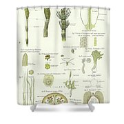 Horse Tail And Pillwort Shower Curtain
