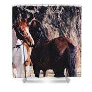 Horse Talk Shower Curtain