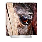 Horse Tears Shower Curtain