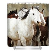 Horses-01 Shower Curtain