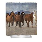 Horses-03 Shower Curtain