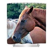 Horses 1 Shower Curtain